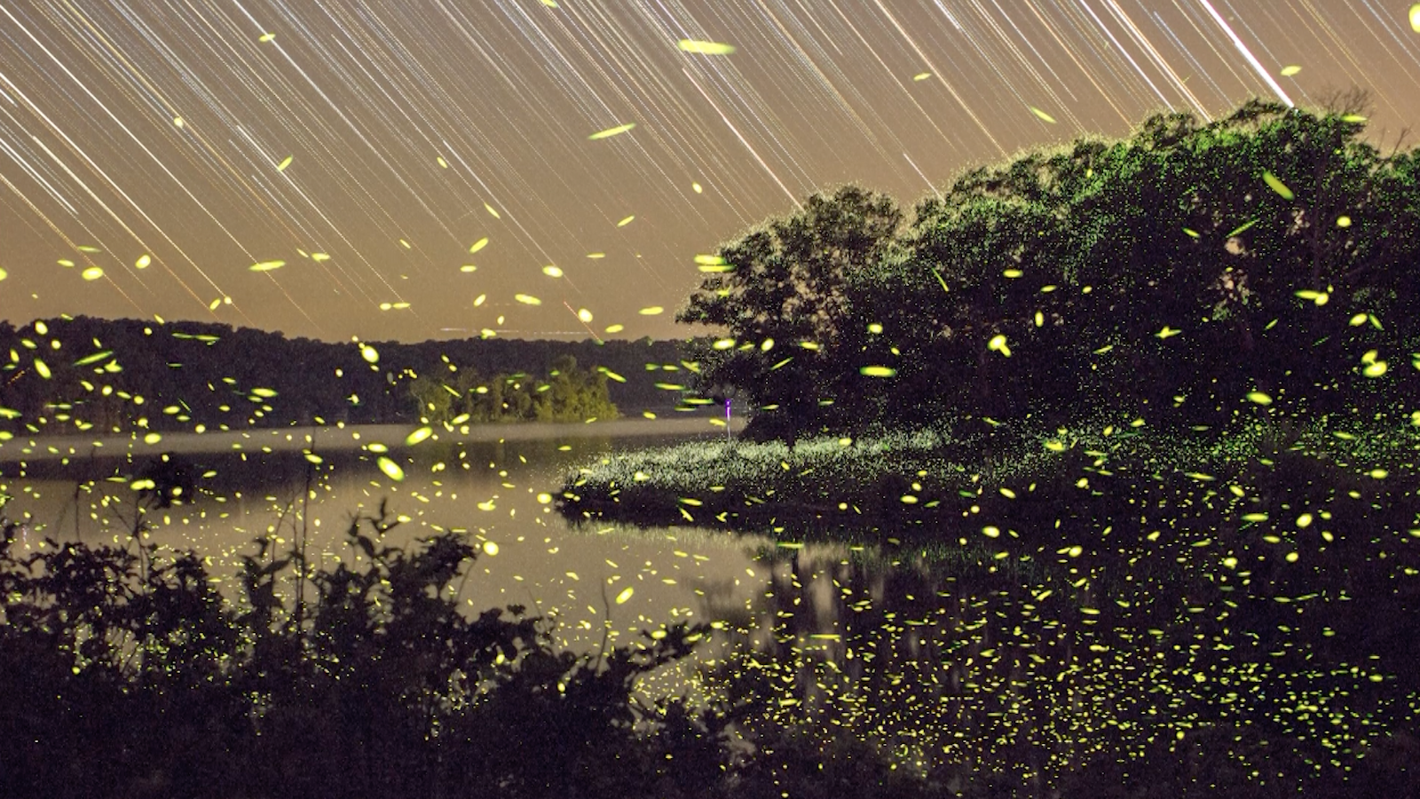Enchanting Fireflies Paint The Sky