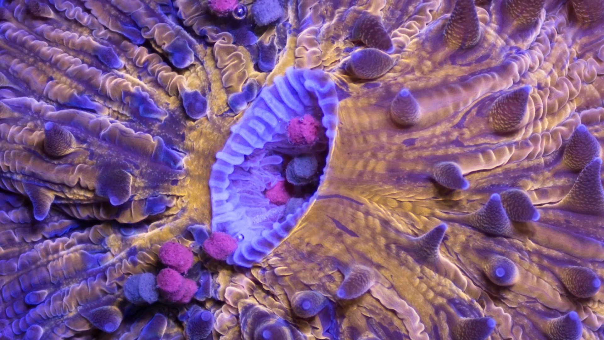 time lapse bizarre beautiful ocean creatures